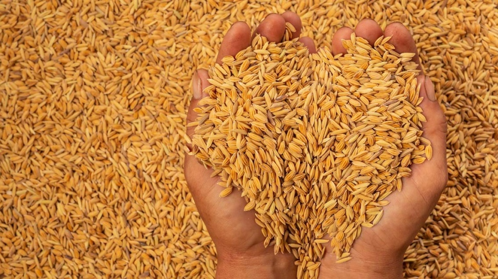 Export Subsidy against export of Rice